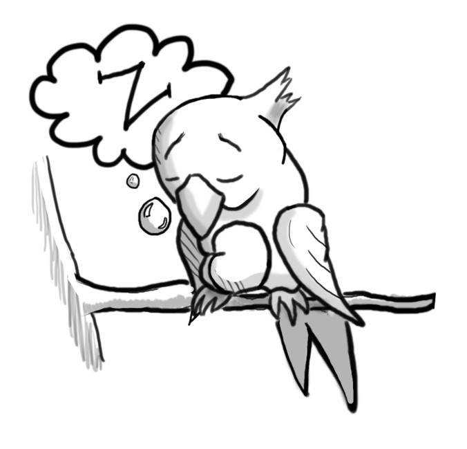 tired bird