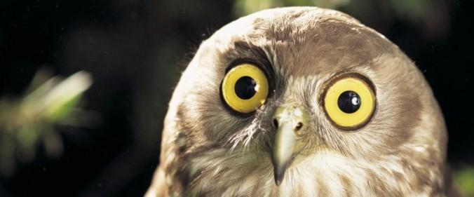owl-e1416689760472