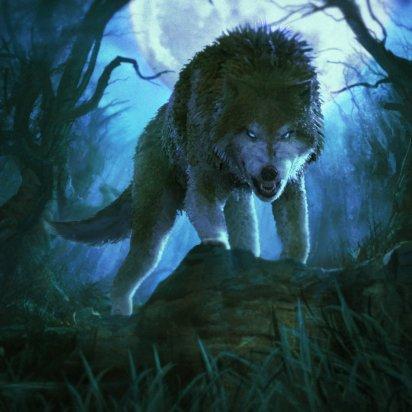 ooki-wolfd